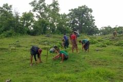 Tree Planting - MCCWG